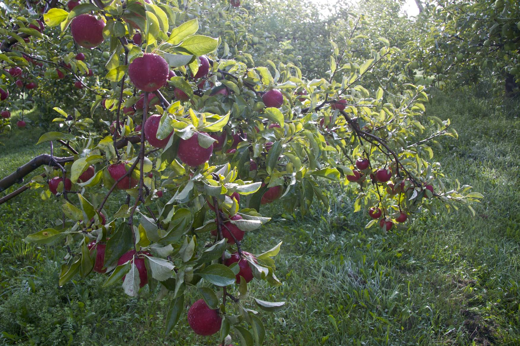 Danby orchard photo by Tucker.