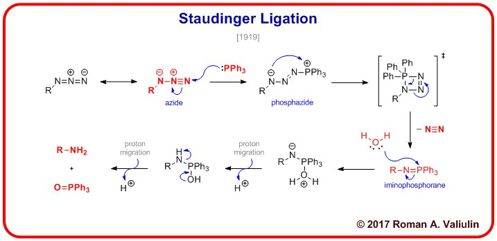 Staudinger ligation is a common bioorthogonal conjugation chemistry technique