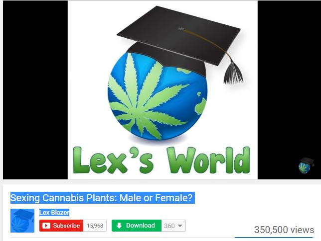 Lex's World