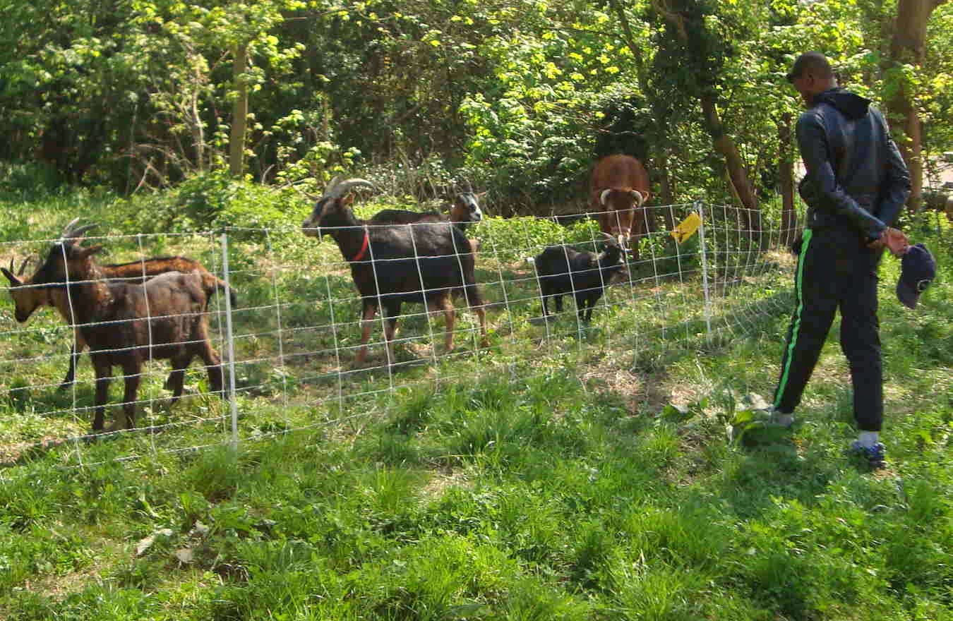 pature tig light.JPG