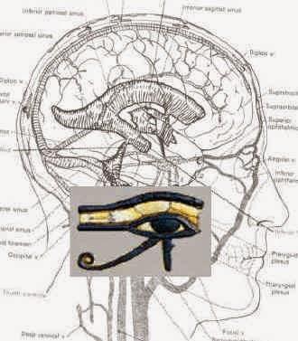 http://2.bp.blogspot.com/-WvewVJvBdTk/VNULlDhLS5I/AAAAAAAAClc/mVoEM9_kl7I/s1600/eye-of-horus-brain.jpg
