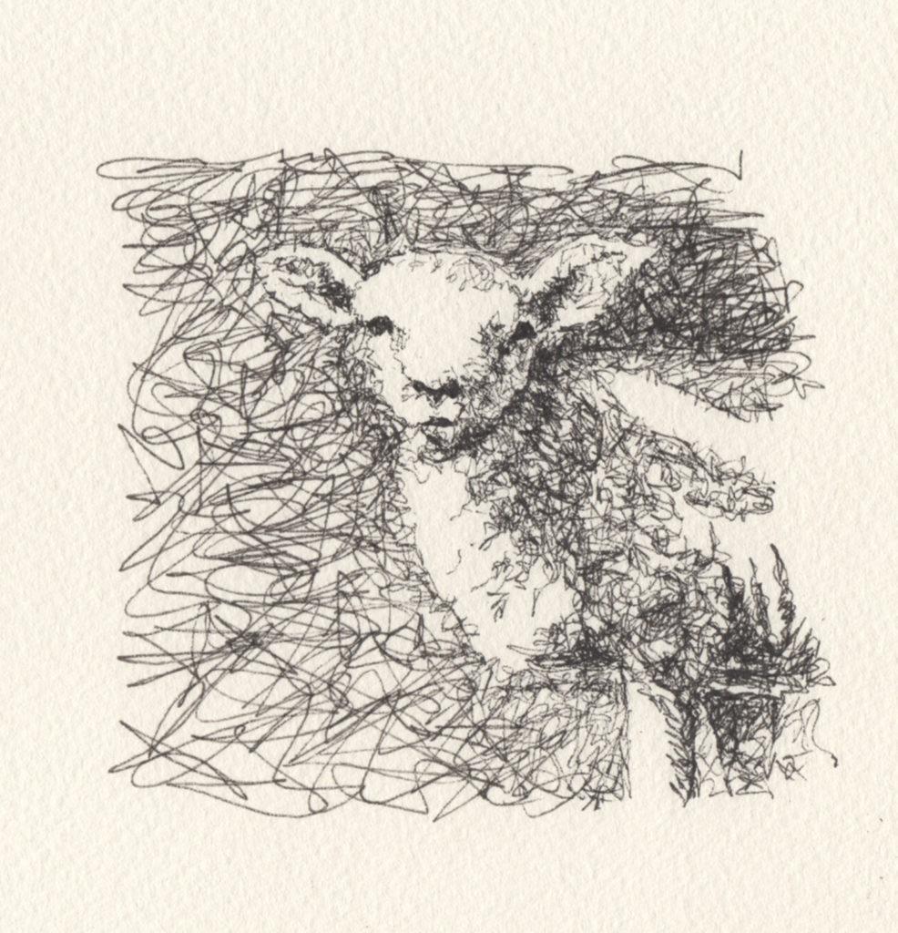 Đầu cừu này được vẽ trên giấy màu nước thô để kết cấu phá vỡ dòng.