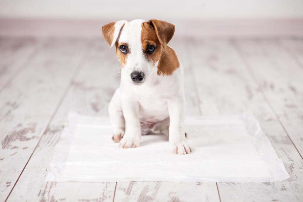puppy sitting on a dry bed