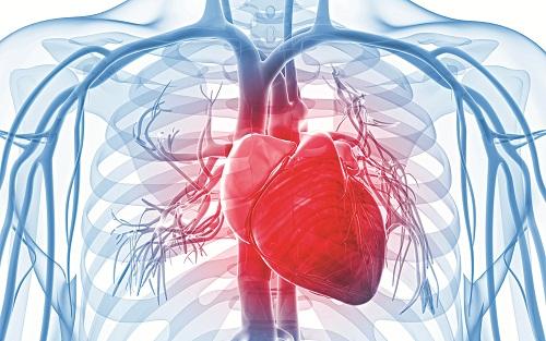Người mắc các bệnh lý về tim