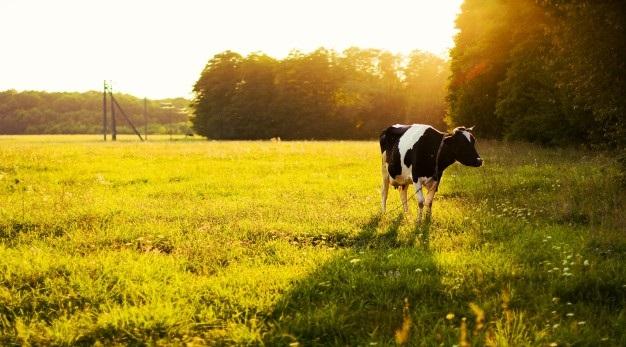 Integração entre pecuária, lavoura e arbóreas proporciona maior sustentabilidade para o setor. (Fonte: Freepik)