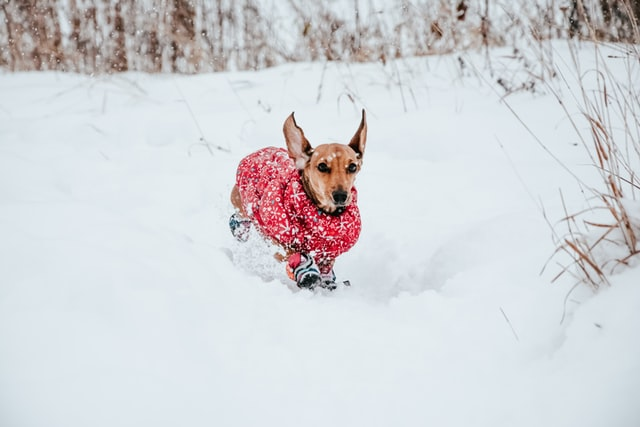 The Unbelievably Easy Way To Prepare Your Pet For Winter.