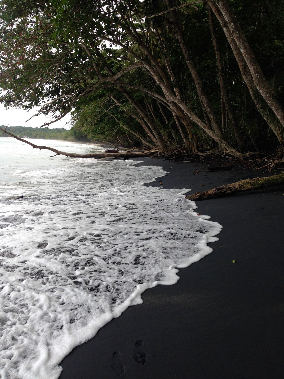 Small wave splashes the black sand coast of playa negra. black sand beach in puerto viejo de talamanca costa rica. Dark sand and mangroves near the shore.