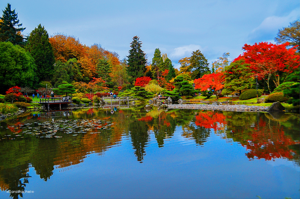 Reflections on The Japanese Garden | iSEE iCAPTURE iSHARE | Rachel ...