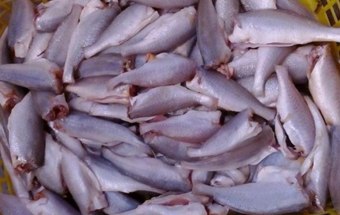 Giá của cá phụ thuộc vào nhiều yếu tố khác nhau