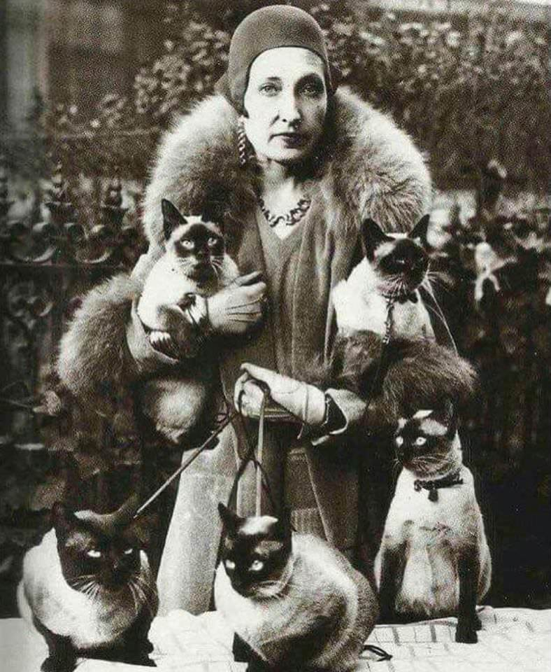 Siamese cats in the early 1900's. Source: imgur.com