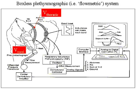 Schematic showing the components of the flowmetric plethysmographic method to measure airway obstruction in the horse.