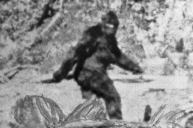 GP: Alleged Photo of Bigfoot