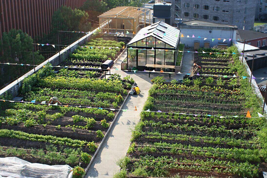 Úžitková záhrada na streche v Dánsku