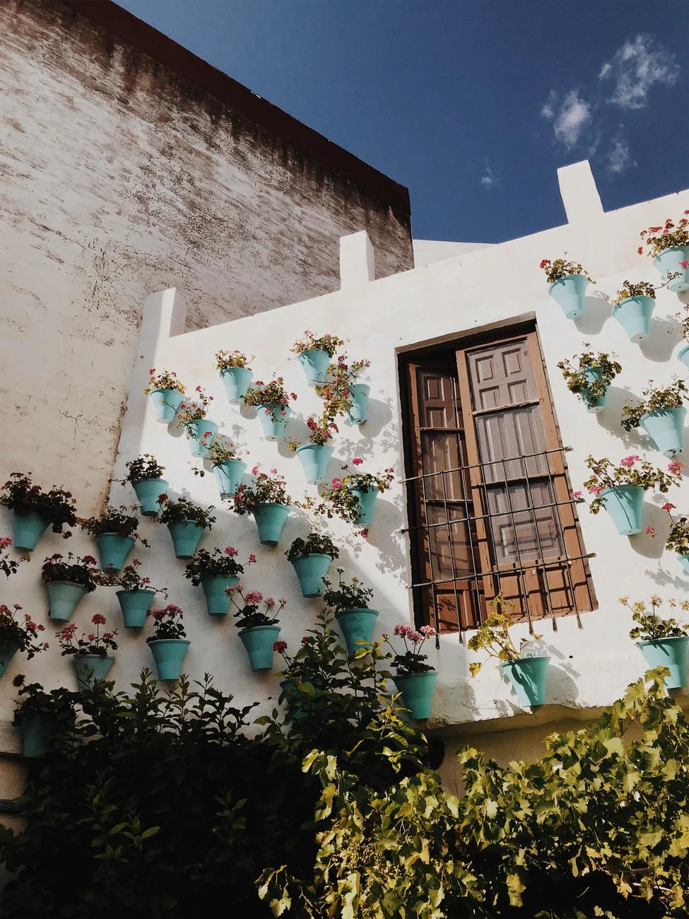 décorer un mur végétalisé