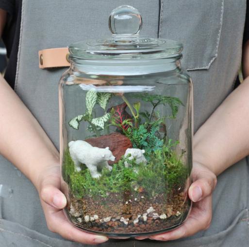 植物生態瓶 DIY材料包