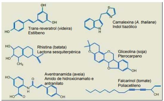 Fonte: Flores et al. em Embrapa