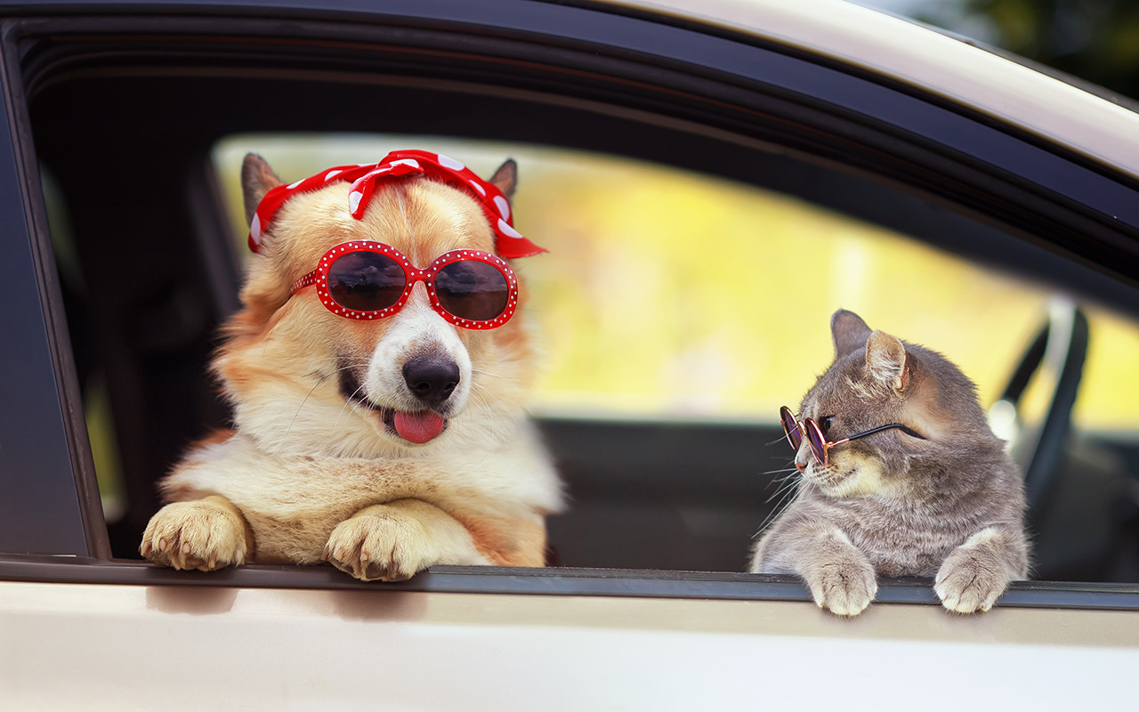Safe travels with pets - Image 1
