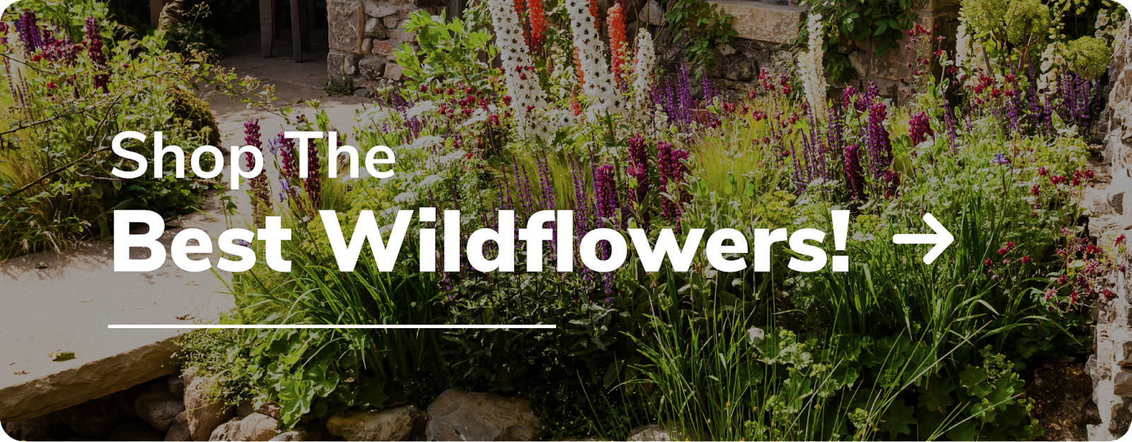 shop wildflowers