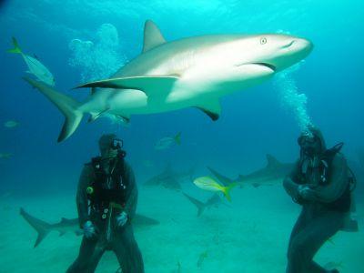 danger-of-scuba-diving-image-sharks.jpg