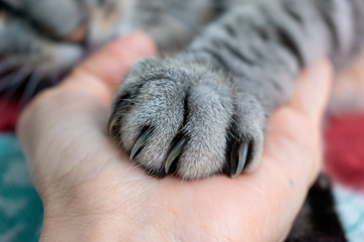 prendre soin des griffes de votre chat