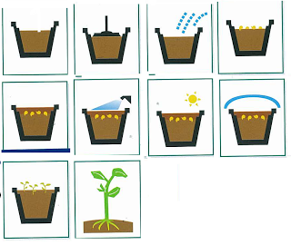 Normas para hacer un buen semillero - Tierra para semilleros ...