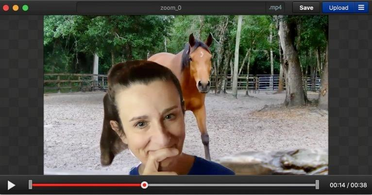 A screen shot of a horse  Description automatically generated