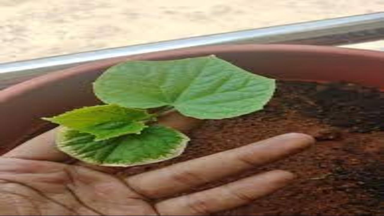 A hand holding a green leaf  Description automatically generated with medium confidence