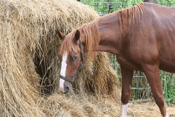 Healthy food for horses
