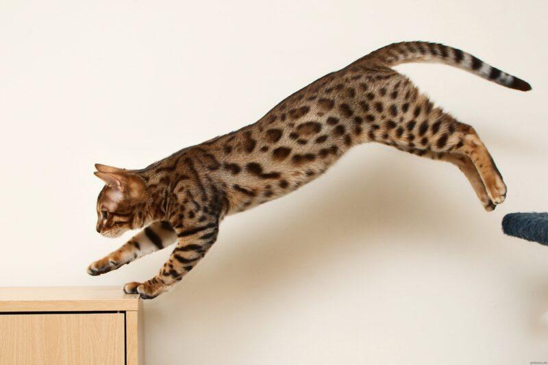 Кошка-холерик