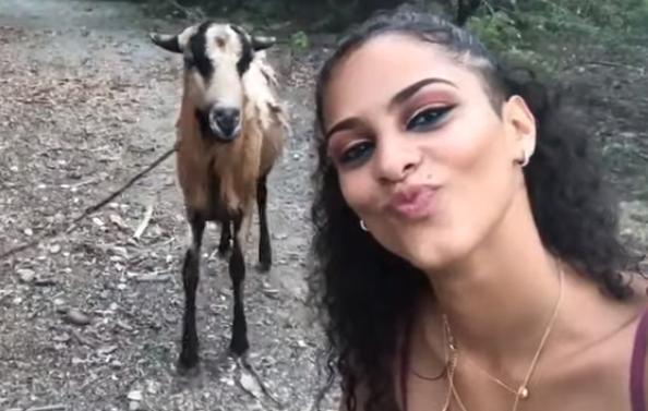 ¡Cabra embiste a Chica y Arruina Selfie!