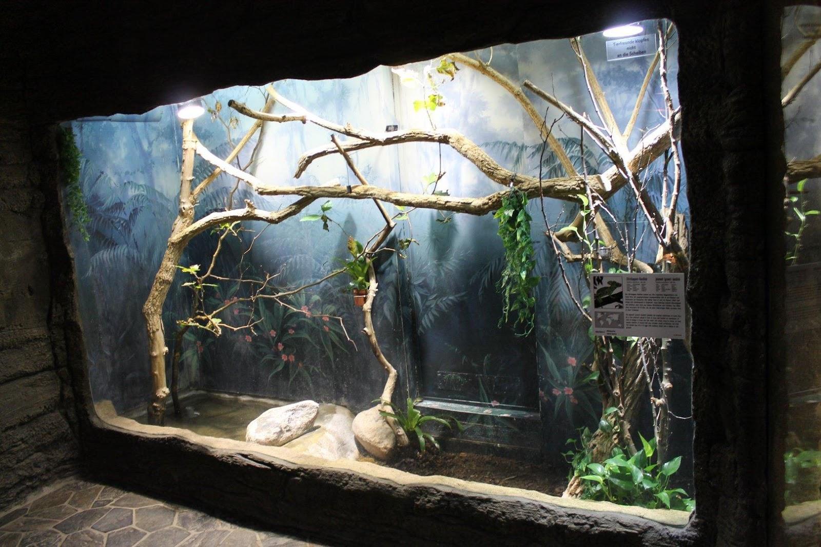 Image result for plumed basilisk enclosure