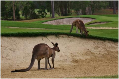 Bush Golf Courses