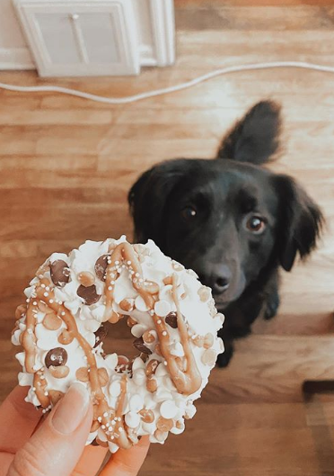 dog with donut from dog bakery in Denver