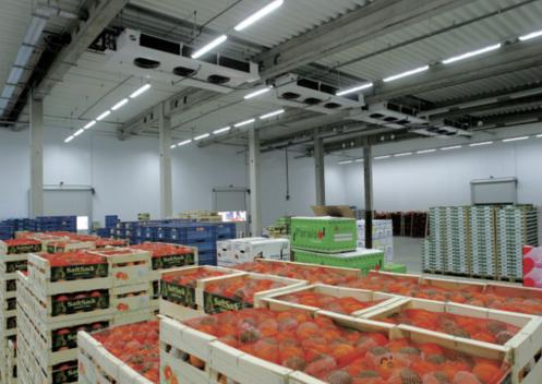 Một kho hoa quả nhập khẩu được đầu tư quy mô