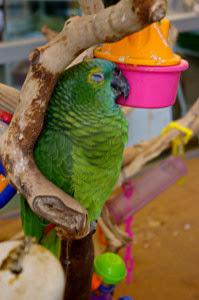 sleeping-parrot-012-199x300.jpg