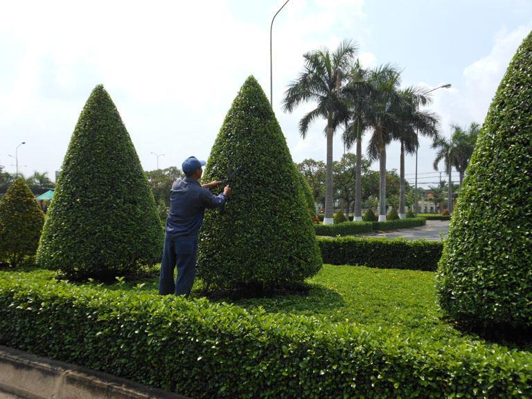 Kết quả hình ảnh cho dịch vụ bảo dưỡng cây xanh