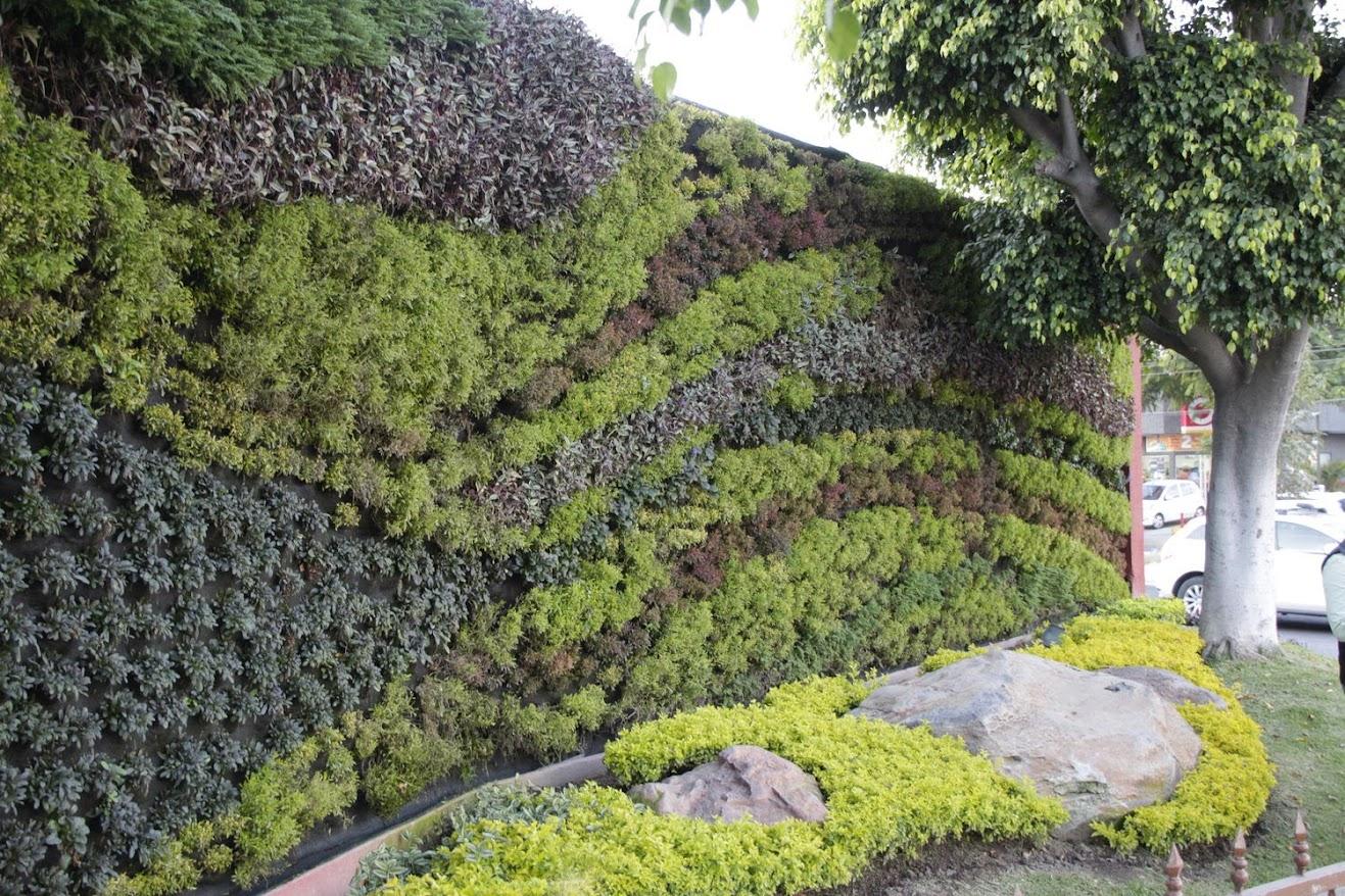 cursos de jardines verticales en m xico conclusiones