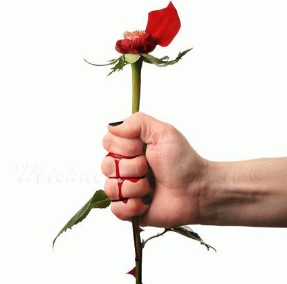 Hoa hồng gai