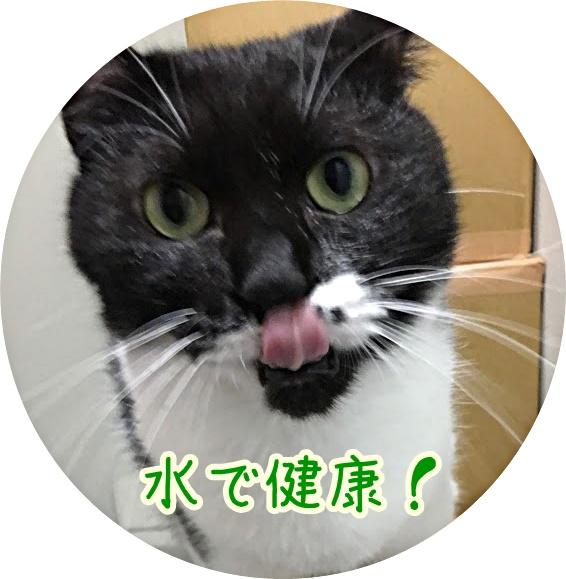 寒い冬には水よりお湯?猫が冬に水を飲まなくなる原因とは