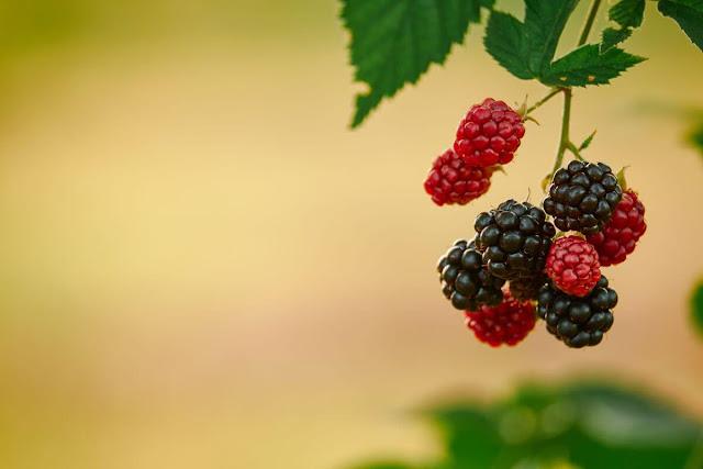 raspberry benefit and harm