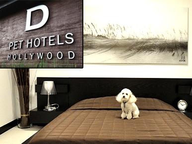 D Dog Hotel Luxury Spa Hote...