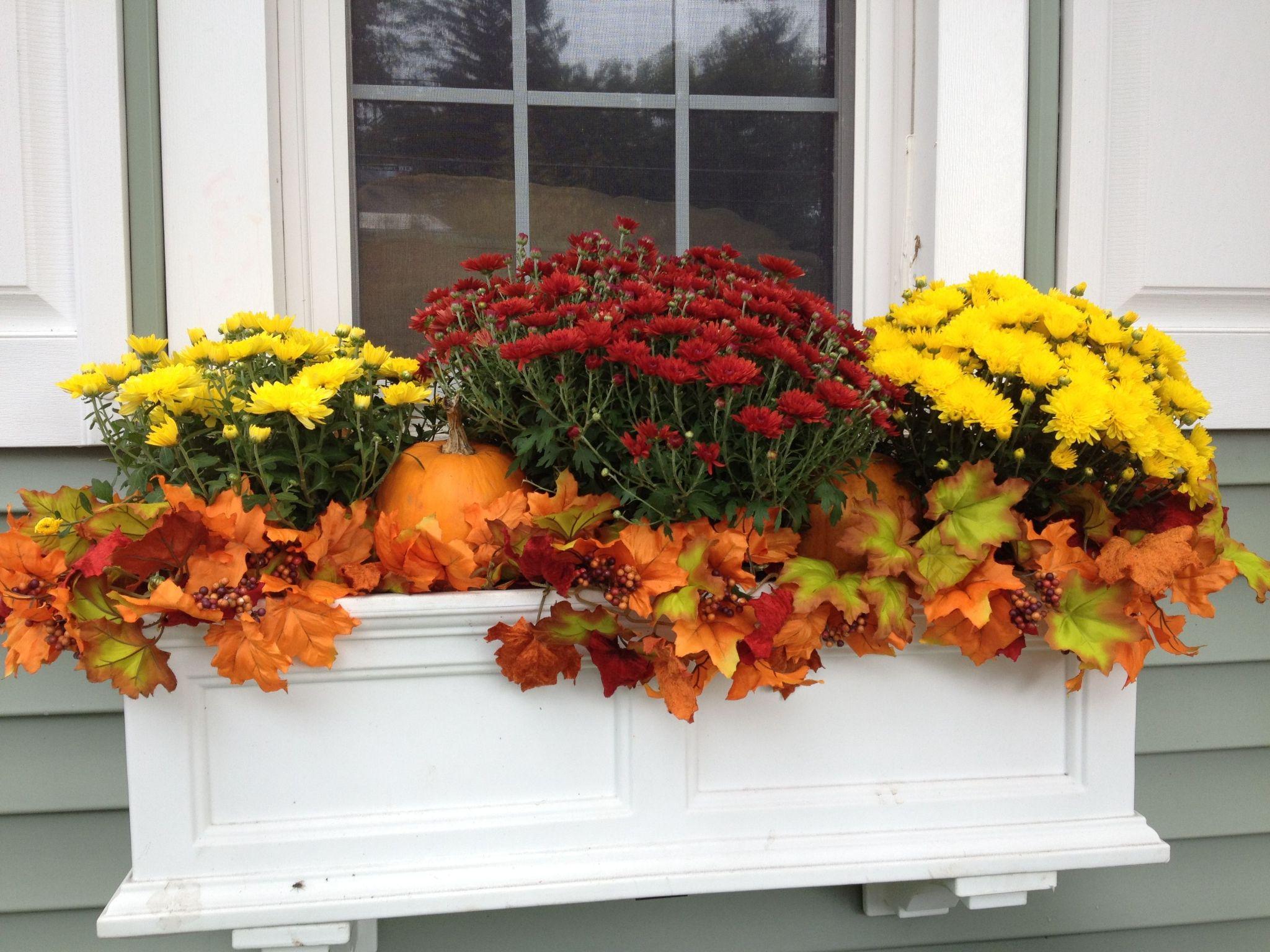 Tips for a Beautiful Fall Window Box Display