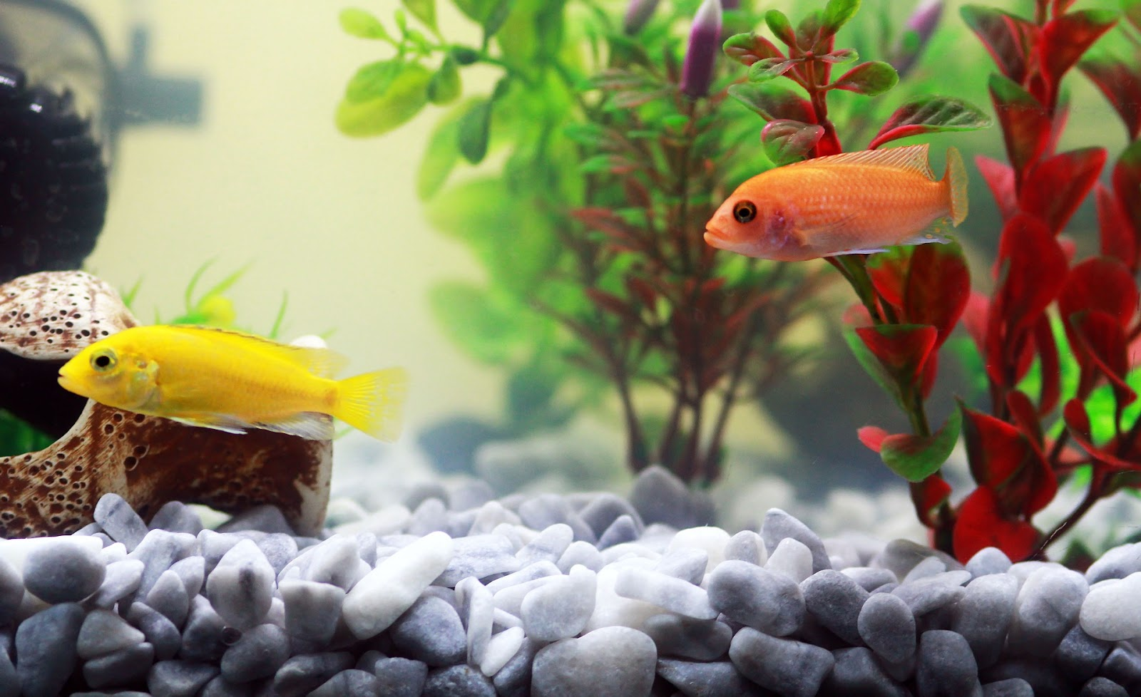 Aquarium with plants and fish