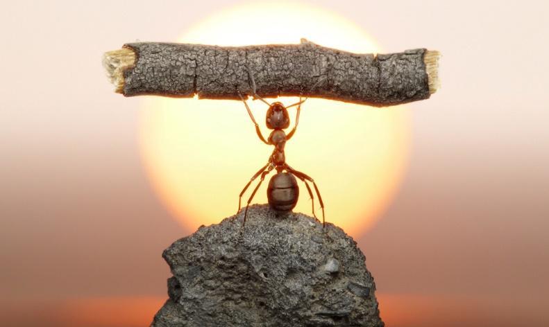 Resultado de imagen para perseverancia