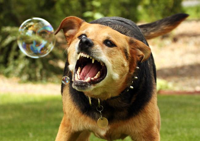 dog-hydrophobia_big.jpg