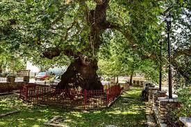 Skeda:Rrapi Prizren6.jpg - Wikipedia