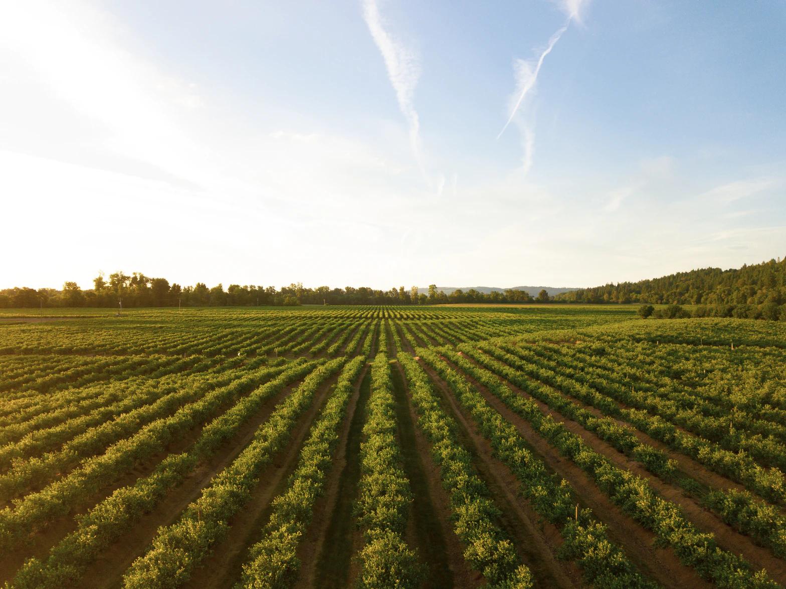 5 reasons why buying a farm is a good idea.