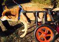 C:UsersuserDesktopTomomi2カット済み大型犬LL2輪477.jpg