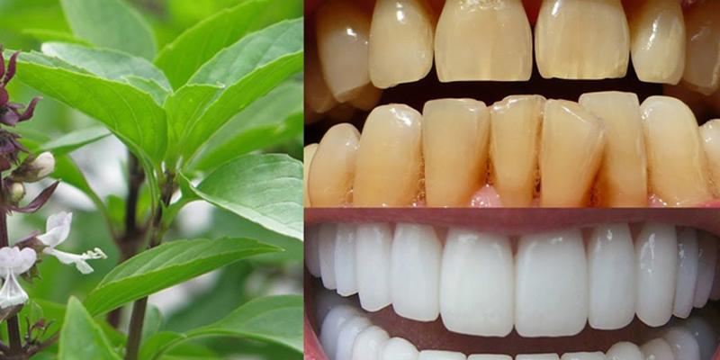 Cách làm trắng răng bằng húng quế Tại nhà Đơn Giản hiệu quả