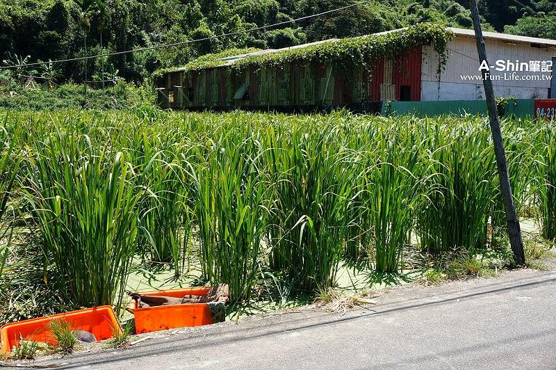 桃米休閒農業區9